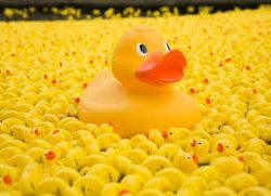 Rothley Charity Duck Race